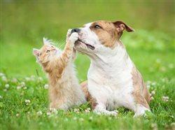 Ser proactivo ayuda a que su mascota viva más tiempo